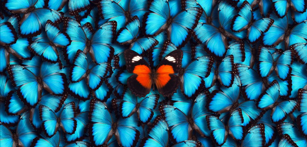 You. Blue Panoramic Butterflies with Golden one at center.