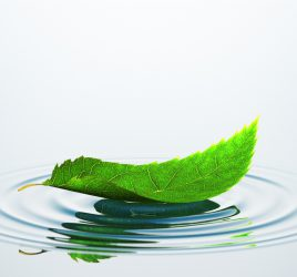 Peace. Leaf On The Water
