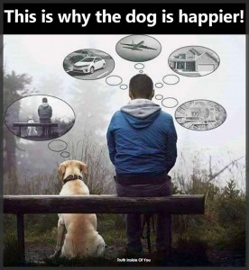 Why a dog is happier. Living in the now.