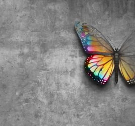 Blank Slate. From nothing, a new image of a butterfly emerges.